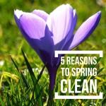 Spring Cleaning Carya